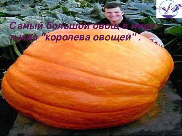 """Самыйбольшойовощвмире- тыква """"королева овощей"""" ."""