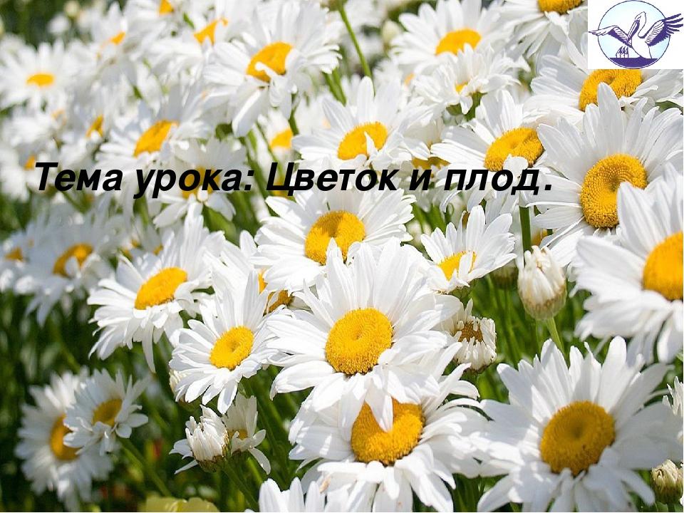Тема урока: Цветок и плод.