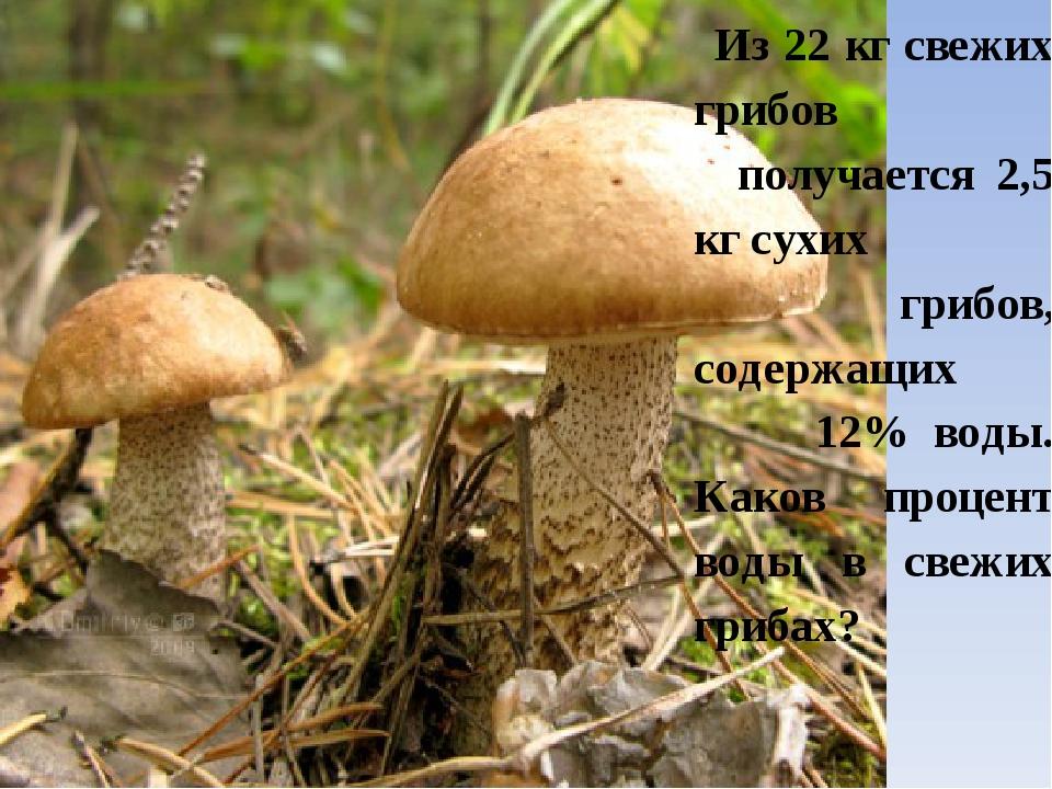 Из 22 кг свежих грибов получается 2,5 кг сухих грибов, содержащих 12% воды....
