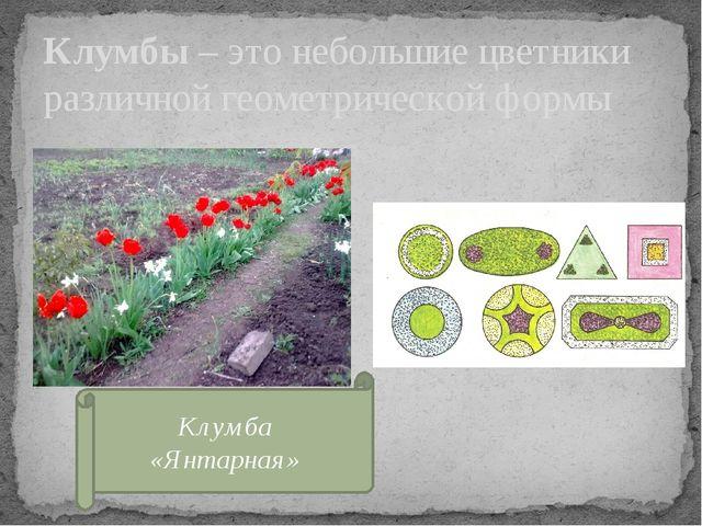 Клумбы – это небольшие цветники различной геометрической формы Клумба «Янтарн...