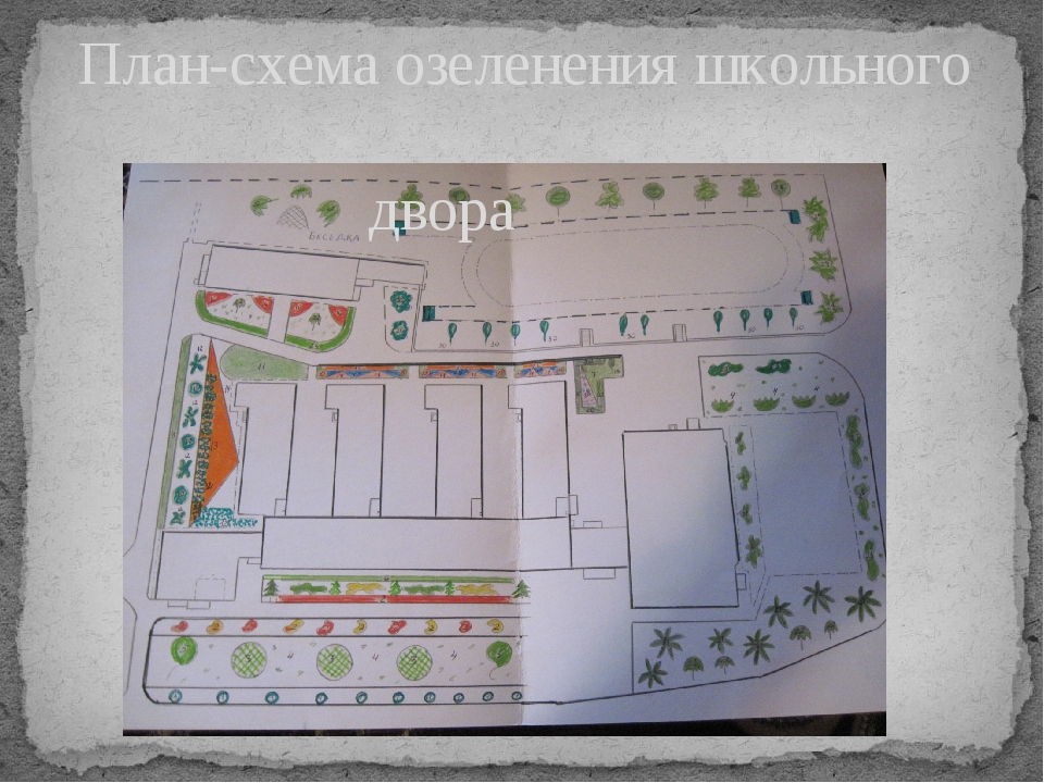 План-схема озеленения школьного двора