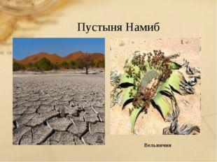 Пустыня Намиб Вельвичия