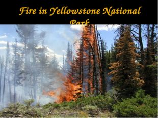 Fire in Yellowstone National Park