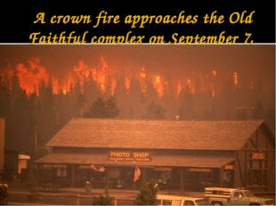 A crown fire approaches the Old Faithful complex on September 7, 1988