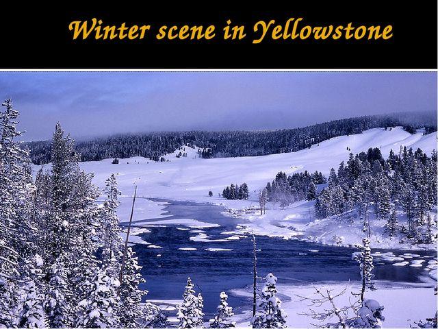 Winter scene in Yellowstone