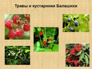 Травы и кустарники Балашихи