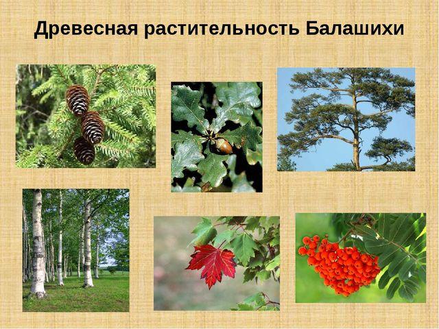 Древесная растительность Балашихи