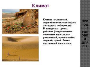 Климат ПРИРОДНЫЕ УСЛОВИЯ ДЛЯ С/Х Климат пустынный, жаркий и влажный (вдоль за