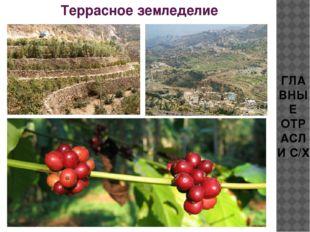 ГЛАВНЫЕ ОТРАСЛИ С/Х Террасное земледелие