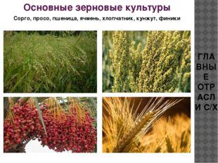 ГЛАВНЫЕ ОТРАСЛИ С/Х Основные зерновые культуры Сорго, просо, пшеница, ячмень,