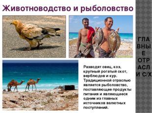Животноводство и рыболовство ГЛАВНЫЕ ОТРАСЛИ С/Х Разводят овец, коз, крупный
