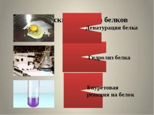Химические свойства белков Денатурация белка Гидролиз белка Биуретовая реакц