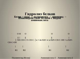 Гидролиз белков Взаимодействие белков с водой Белок + вода → полипептид → ди