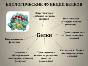 БИОЛОГИЧЕСКИЕ ФУНКЦИИ БЕЛКОВ Белки Энергетическая -снабжают организм энергией