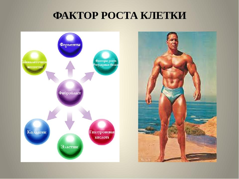ФАКТОР РОСТА КЛЕТКИ