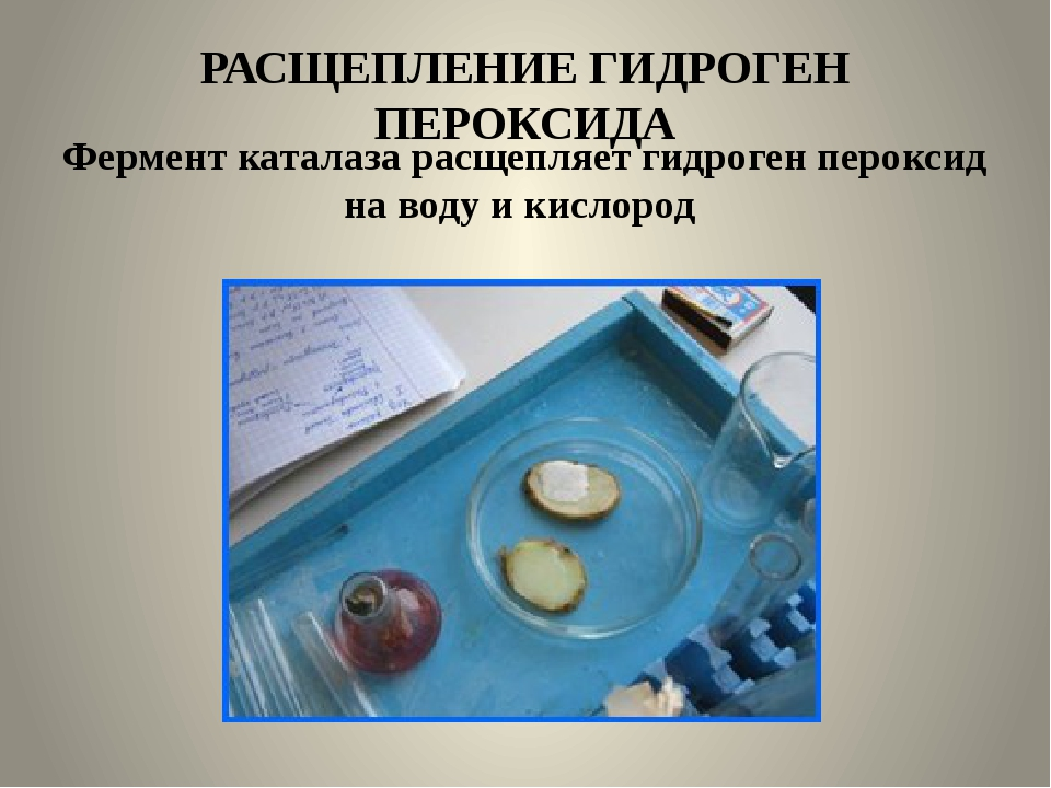 РАСЩЕПЛЕНИЕ ГИДРОГЕН ПЕРОКСИДА Фермент каталаза расщепляет гидроген пероксид...