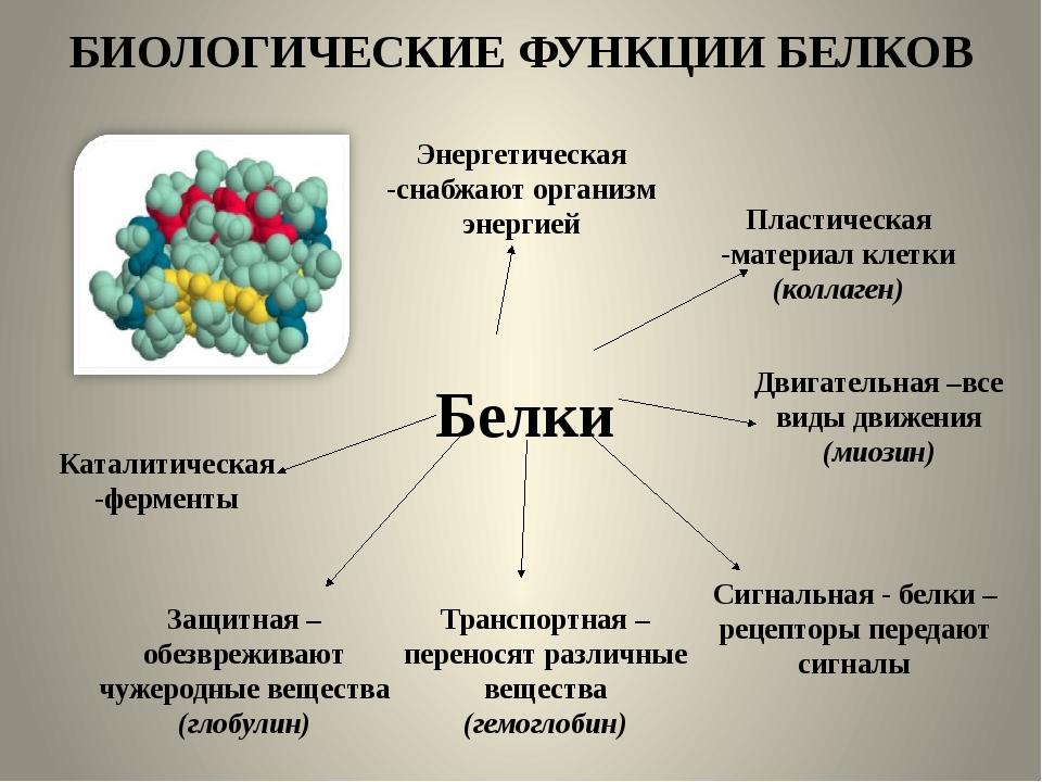 БИОЛОГИЧЕСКИЕ ФУНКЦИИ БЕЛКОВ Белки Энергетическая -снабжают организм энергией...