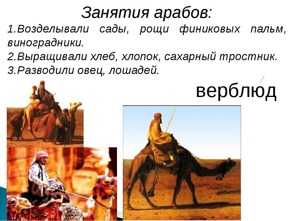 Занятия арабов: Возделывали сады, рощи финиковых пальм, виноградники. Выращив...