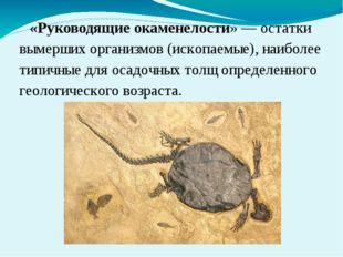 «Руководящие окаменелости» — остатки вымерших организмов (ископаемые), наибол