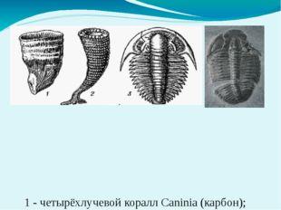1 - четырёхлучевой коралл Caninia (карбон); 2 - археоциат Kotuyicyathus(кемб