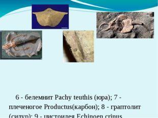 6 - белемнит Pachy teuthis (юра); 7 - плеченогое Productus(карбон); 8 -гра