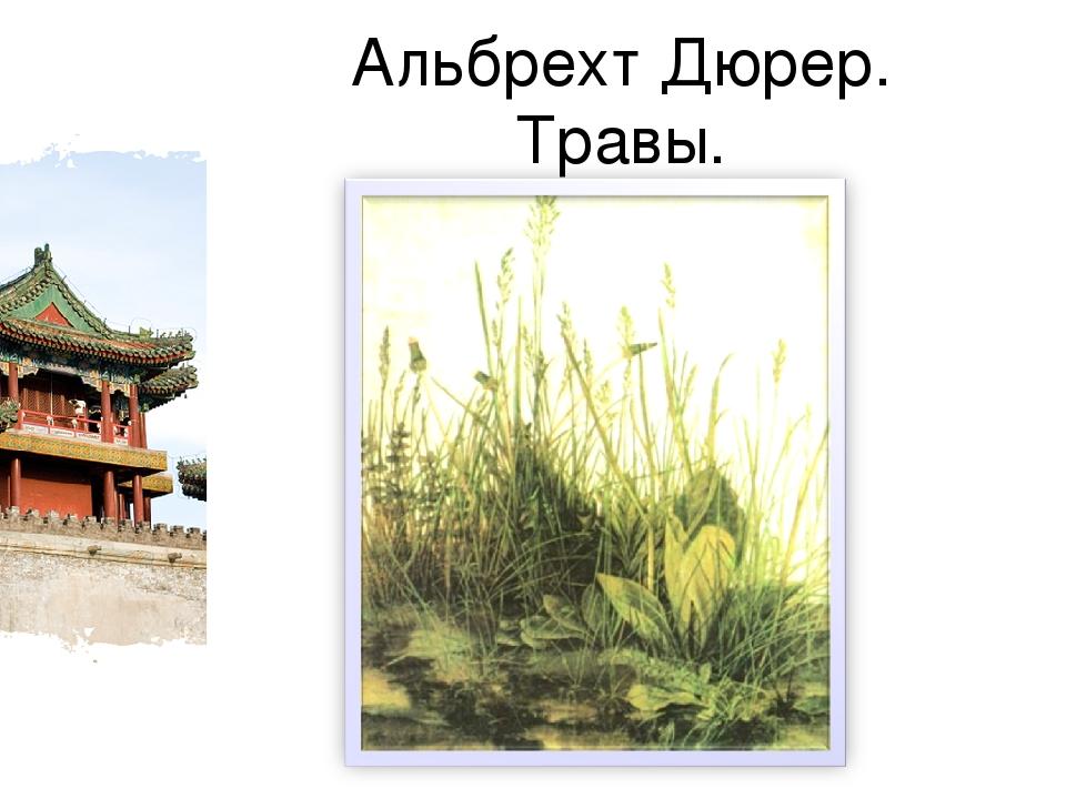 Альбрехт Дюрер. Травы.