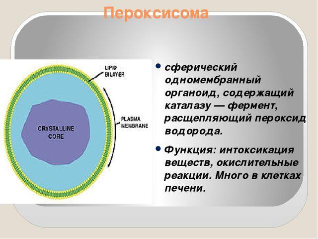 Пероксисома сферический одномембранный органоид, содержащий каталазу — фермен...