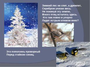 Зимний лес не спит, а дремлет, Серебром унизан весь. Не покинув эту землю, Мн