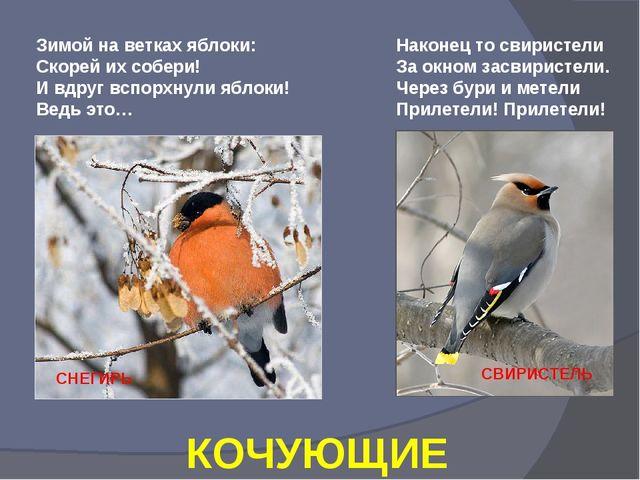 Зимой на ветках яблоки: Скорей их собери! И вдруг вспорхнули яблоки! Ведь это...