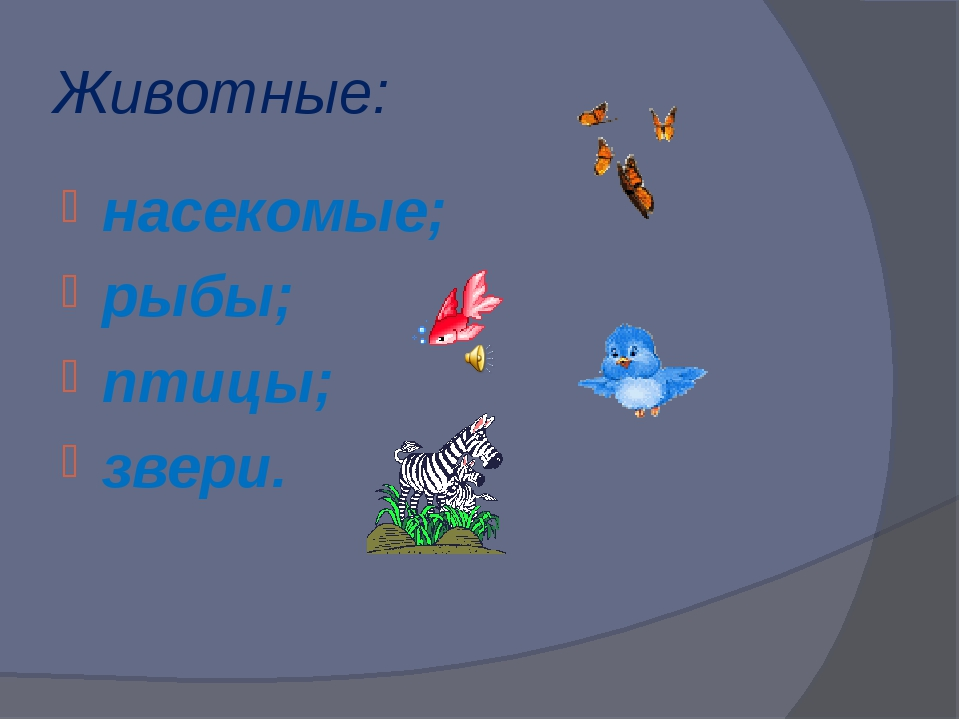 Животные: насекомые; рыбы; птицы; звери.