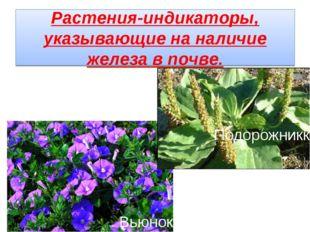 Растения-индикаторы, указывающие на наличие железа в почве. Вьюнок Подорожникк