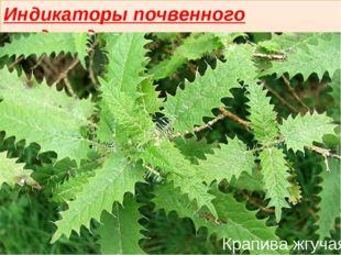 Индикаторы почвенного плодородия Крапива жгучая