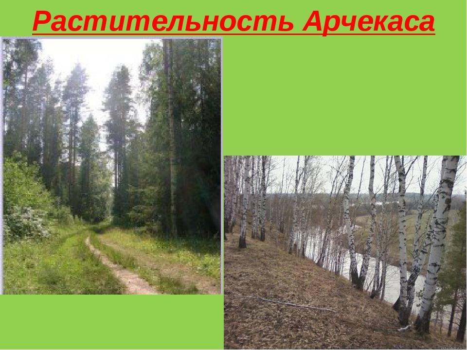 Растительность Арчекаса