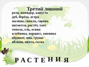 Третий лишний роза, помидор, капуста дуб, берёза, астра малина, свекла, сире