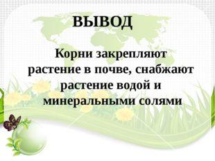ВЫВОД Корни закрепляют растение в почве, снабжают растение водой и минеральны