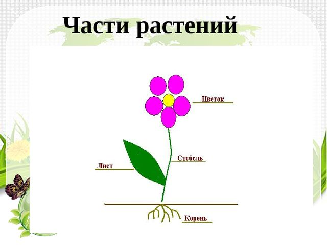 Части растений