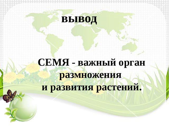 вывод СЕМЯ - важный орган размножения и развития растений.