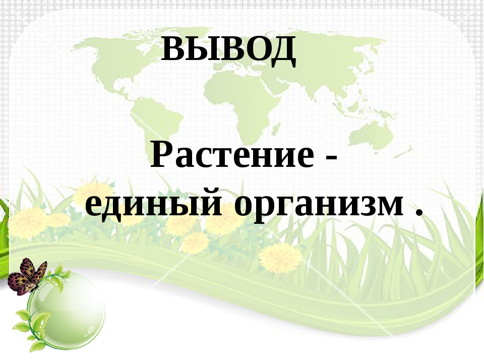 ВЫВОД Растение - единый организм .