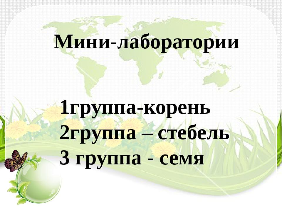 Мини-лаборатории 1группа-корень 2группа – стебель 3 группа - семя