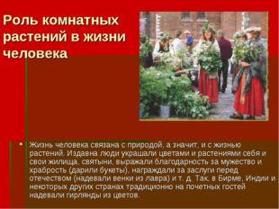 Роль комнатных растений в жизни человека Жизнь человека связана с природой, а