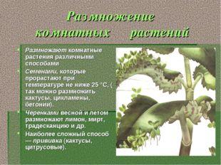 Размножение комнатных растений Размножают комнатные растения различными спосо