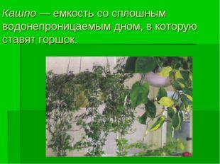 Кашпо — емкость со сплошным водонепроницаемым дном, в которую ставят горшок.