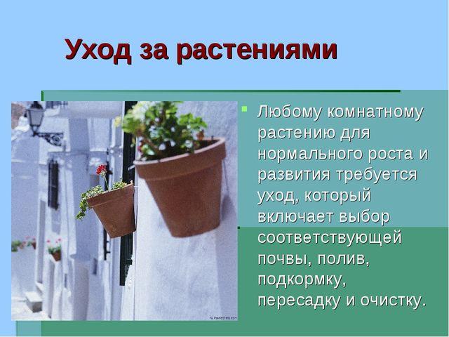 Уход за растениями Любому комнатному растению для нормального роста и развити...