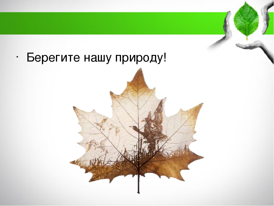 Берегите нашу природу!