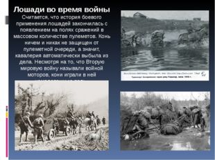 Лошади во время войны Считается, что история боевого применения лошадей закон