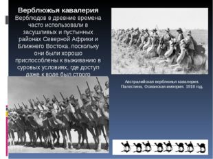 Австралийская верблюжья кавалерия. Палестина, Османская империя. 1918 год. Ве