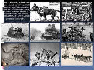 Наши собаки во время ВОВ несли самую разную службу: были ездовые собаки, соба