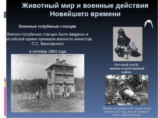 Военные голубиные станции Военно-голубиные станции были введены в Российской