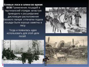 Боевые лоси и олени во время ВОВ Применение лошадей в партизанский отрядах за