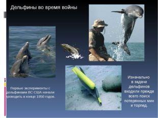 Первые эксперименты с дельфинами ВС США начали проводить в конце 1950 годов.